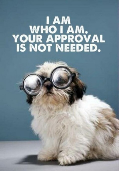 confident-dog.jpg